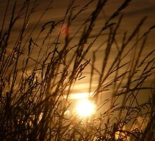 Glow Through The Grass by Vicki Spindler (VHS Photography)
