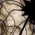 Cheveux D'Ange Detail by elisabeth tainsh