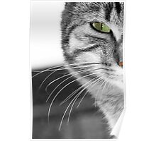 Cat's Whiskers Poster