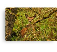 See You Deer Canvas Print
