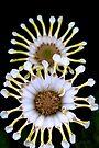 Pinwheels by Renee Hubbard Fine Art Photography