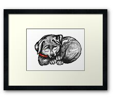 Sleeping Lab Framed Print