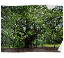 The Major Oak Poster