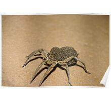 Wolf Spider and spiderlets Poster