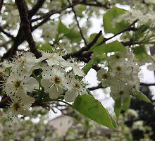 Spring's Bloom by Saiyn