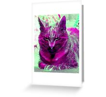 Nature of Cats Greeting Card