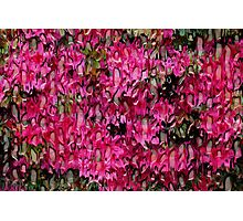 Melting Flowers Abstract Photographic Print