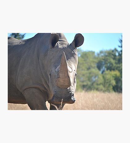 Southern White Rhinoceros Photographic Print