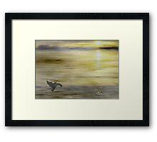 A bird and  the sun Framed Print