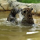 Still Struggling to Stay Above Water by Gail Falcon