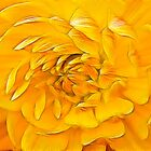 Sunset flower by BizziLizzy