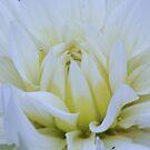 October  Flower  by Sean Farragher