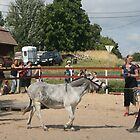Aasipäivät ('Donkey weekend') in Inkoo, Finland #2 by homesick
