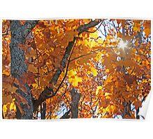 """Autumn Burst of Light"" Poster"