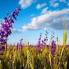 Purple flowers close-up by Dfilyagin