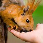 Squirrel sitting on the tree by Dfilyagin