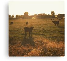 Cattle at sunset Canvas Print