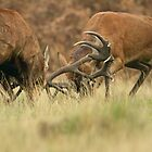 The Rut by Richard Bond