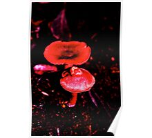Fungi in the woods one day, then I played with it :) Poster