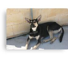 Protectora de Animales y Plantas de Málaga 6 Canvas Print