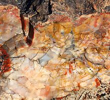 Petrified Wood by Chappy