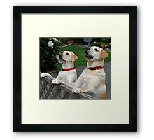 Hey Look Rosie... A UFO!!! Framed Print
