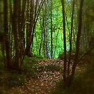 Out of the woods by Tarolino