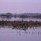 Misty Floods by nickspics