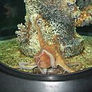 Fort Fisher NC aquarium by dmcfadden