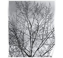 Tree of Change Poster