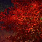 Red Maple Tree by Susanne Van Hulst