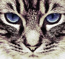 Demi Kitty by lawleypop