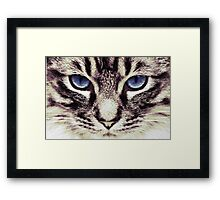 Demi Kitty Framed Print