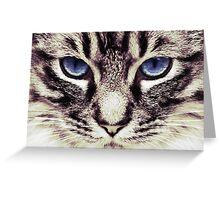 Demi Kitty Greeting Card
