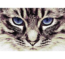 Demi Kitty Photographic Print