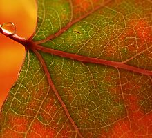 Aspen Leaf Abstract by Steve  Taylor