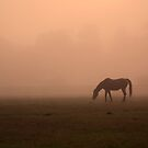 Horses in the Mist II by AngelPhotozzz