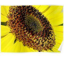 sunflower in the sun....life by the drop Poster
