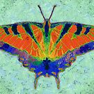BUTTERFLY FORESEES A BREEZE by Jean Gregory  Evans