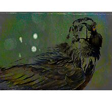 A Crow for Andy Warhol Photographic Print