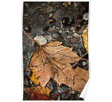 Leaf Study - Fall Poster