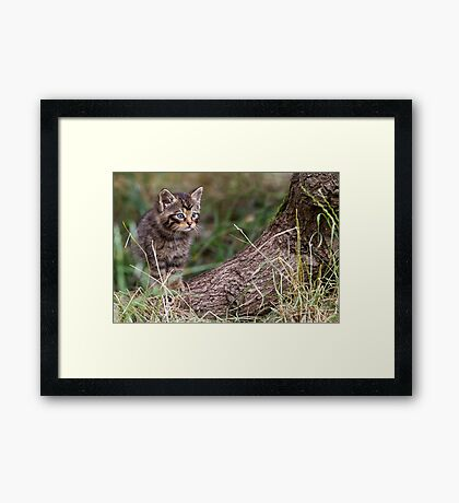 Wild Cat Kitten Framed Print
