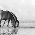 Wild Horses Feeding on the Marsh by NCBobD