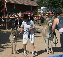 Aasipäivät ('Donkey weekend') in Inkoo, Finland #1 by homesick