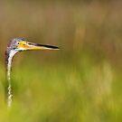 Peek-A-Boo Birdie by NCBobD