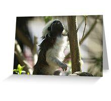 Cottontop Tamarin (Saguinus oedipus) Greeting Card