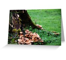Where the Green Grass Grows... Greeting Card