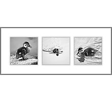 A New Life in Black & White Photographic Print