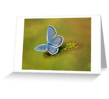 grey butterfly Greeting Card