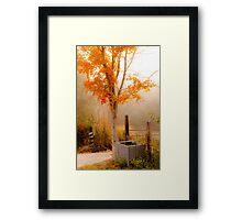 Burst of Orange Framed Print